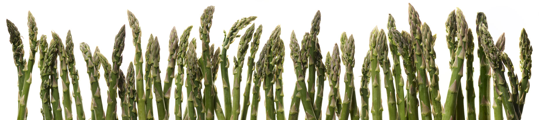 Asparagus_Panorama1-cropped-flat